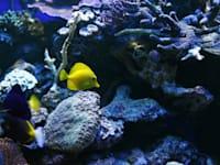 אלמוגים + אקווריום + דגים / צילום: כפיר זיו