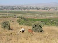גבול ישראל סוריה קוניטרה ברקע / צילום: איל יצהר