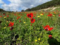 פארק רמות מנשה בעמק השלום / צילום: איל יצהר