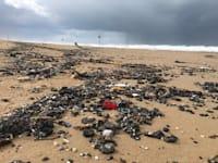 זיהום הזפת בחופי ישראל / צילום: מרכז למחקר סביבתי חיפה