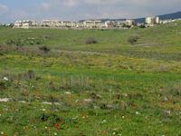 עמק השלום, יקנעם / צילום: איל יצהר