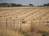 קרקע חקלאית / צילום: עינת לברון
