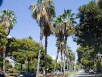 רעננה. השכונה החדשה אמורה להוסיף לעיר 20 אלף תושבים / צילום: שלומי יוסף