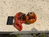 """""""ש משלוח מטילי זהב שהוסלק בארגזי עגבניות בדרך מרצועת עזה ליו / צילום: רשות המעברים משרד הבטחון"""