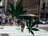 """עלי קנאביס מאוירים על חלון ראווה בניו יורק. המדינה ה-16 בארה""""ב שמאשרת לגליזציה / צילום: Reuters, Carlo Allegri"""