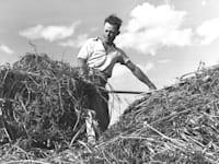 חקלאי בכפר חיטים בגליל. מאז שנות ה-50 אין התאמה בין הצרכים לבין המשאבים המוקצים למגדלים / צילום: לע''מ