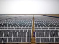 לוחות סולאריים בסין / צילום: Reuters, Carlos Barria