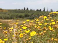 שטחי חקלאות וטבע מתערבבים זה בזה / צילום: אורלי גנוסר