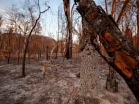 עצים שרופים באמזונס / צילום: גרינפיס