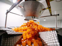מפעל סוכריות הגומי טופ גאם / צילום: מצגת החברה