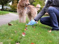 היחס בין מספר הכלבים לבני האדם בתל אביב נחשב לאחד הגבוהים בעולם / צילום: Shutterstock, Saklakova