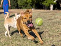 על הנחלה הוקם עסק לגידול כלבים, בני הזוג נמנעו מלרשום את הנחלה בטאבו / צילום: Shutterstock