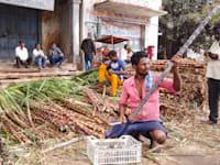חקלאי בחוות קני סוכר בהודו / צילום: Shutterstock, PRIYA DARSHAN