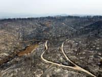 יער שרוף באי היווני אוויה / צילום: Associated Press, Michael Varaklas