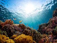 שונית אלמוגים באינדונזיה / צילום: Shutterstock, Dudarev Mikhail