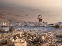 מצפה רמון / צילום: Shutterstock