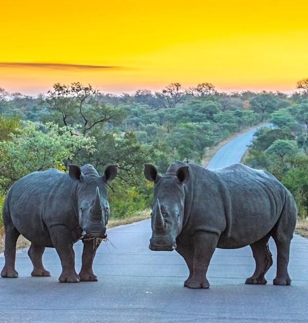 קרנפים בפארק הלאומי קרוגר. תיירות הטבע היא מעמודי התווך של הכלכלה הדרום אפריקאית / צילום: Shutterstock