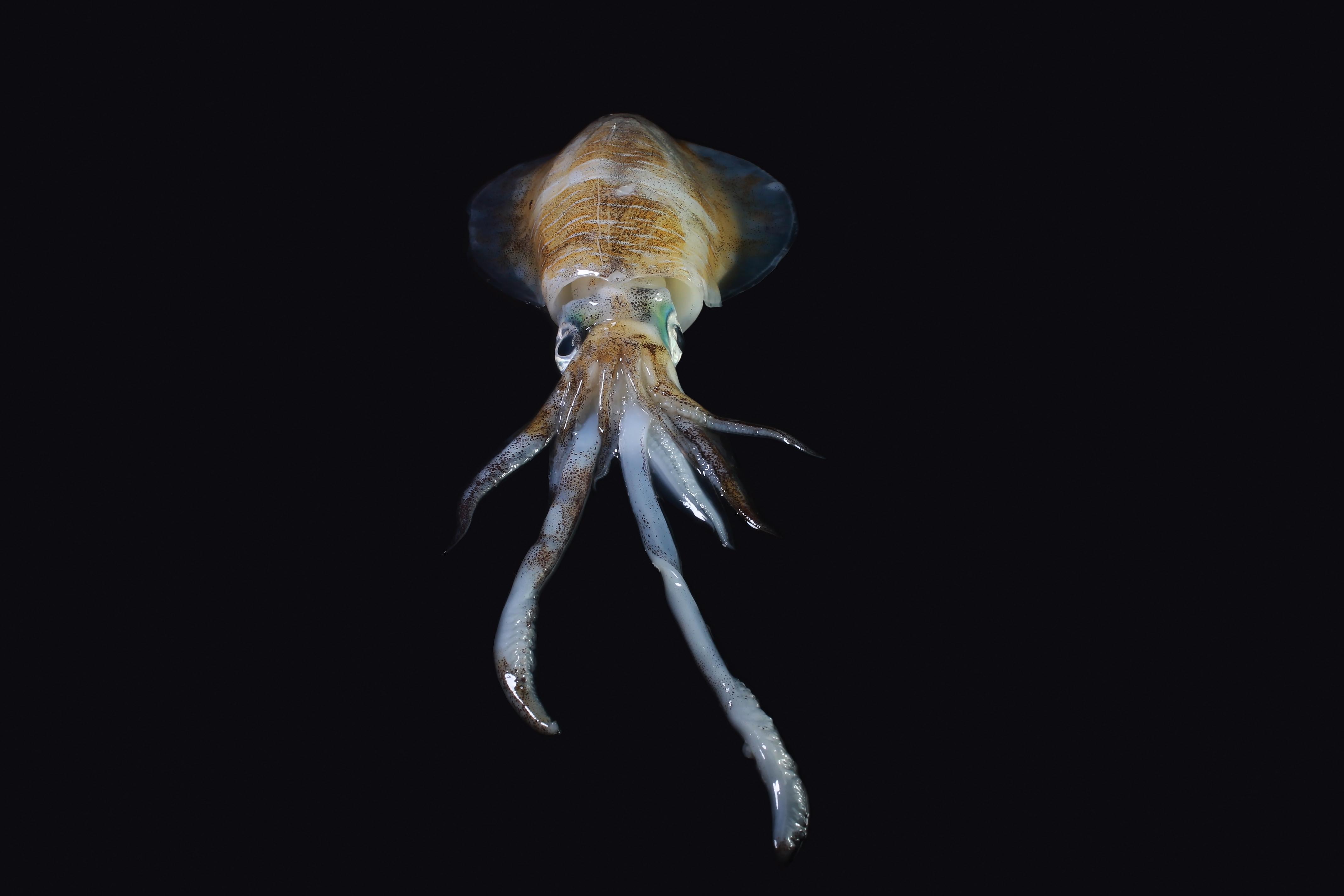 תמנוני ענק הופכים לקטנים יותר כדי להתאים את עצמם לאקלים המשתנה