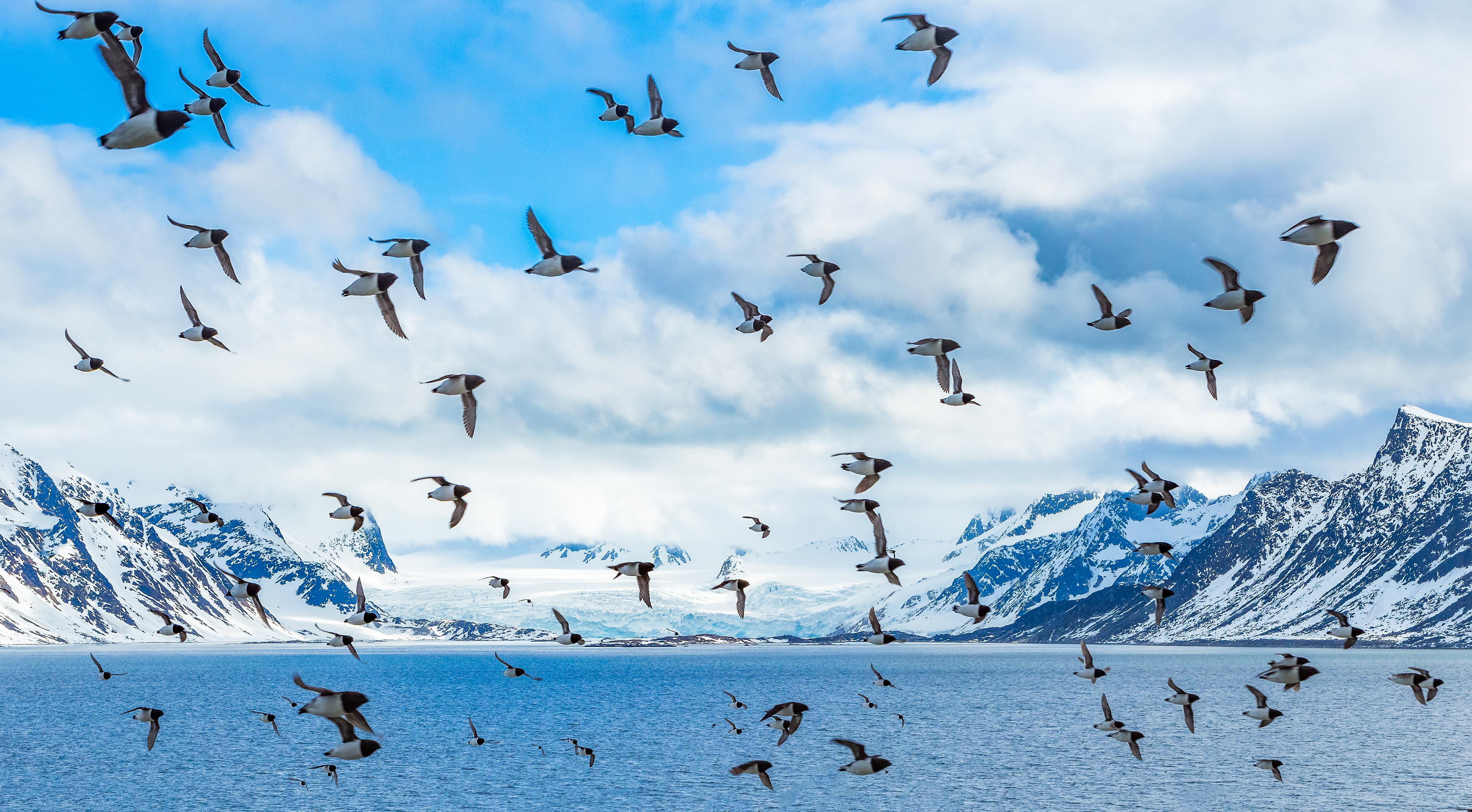יוני ים של האזור הארקטי ייאלצו לנדוד יותר משעה בעתיד של קרחונים נעלמים