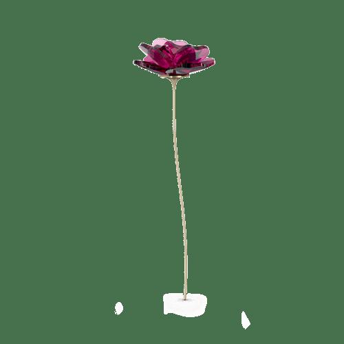 Garden Tales, Rosa - ID 5557800