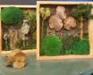 Cuadro con Marco de Madera, Elementos Vegetales Preservados y Secos