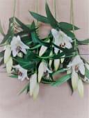 Ramo De Lilium Blancos Con Verdes Variados