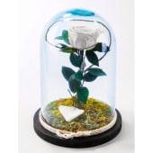 Rosa eterna blanca en cristal