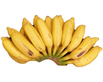 Small Sweet Bananas