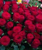 Rosa singola colore a scelta