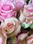 Bouquet di roselline rosa