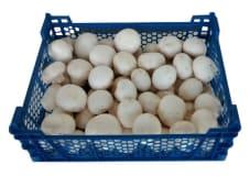 Ciuperci Champignon albe vrac
