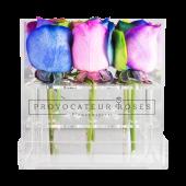 Rosas arcoiris con caja acrílica (9 uds)