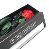 Eternity Box