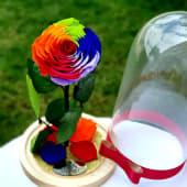 Trandafir multicolor criogenat XXL in cupola