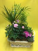 Composizione piante             C006