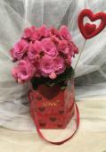Begonia en caja bolso Love