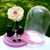 Trandafir criogenat XXL  in cupola
