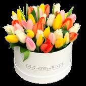 Box tulipanes