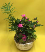 Composizione piante         C004