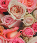 Mazzo di rose colore rosa -7 rose