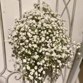 Ramo de paniculata blanca