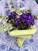 მინდვრის ყვავილები #1