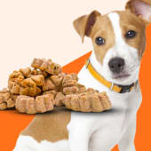 Snack Perro pequeño