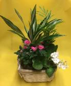 Composizione piante               C005
