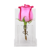 Rosa deep purple con caja acrílica