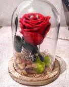 Rosa roja preservada en campana de cristal (1 ud.)