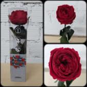 Rosa inglesa preservada