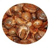 Caracoles Picantillos (400 Gr.)
