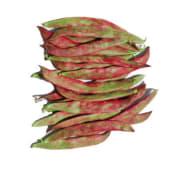 Judias Roquet al vapor con aceite de oliva virgen extra y sal 25o g