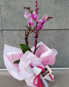 Orquidea flor mini. Altura 40 cm
